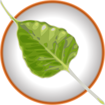 bodhi_leaflogo